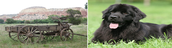 Jim MacKenzie's buckboard wagon was very much like the wagon shown above, and the dog looks very much like Laddie.